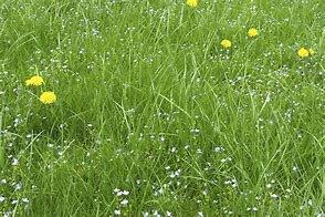 long grass2